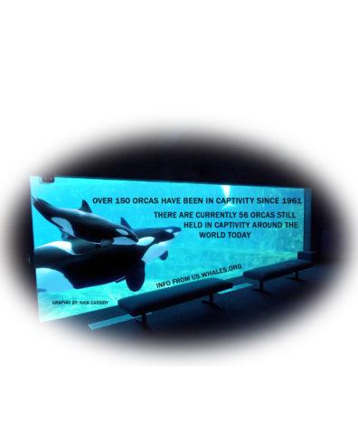 SeaWorld ends orca performances